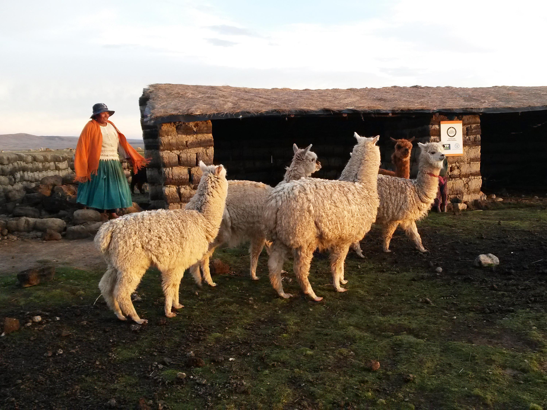 World Animal Protection | Bolivia